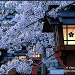 Классическая Китайская и Японская музыка-Китайская классическая музыка - Цветущая вишня (эрху)